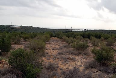 Land for sale in Koutsouras
