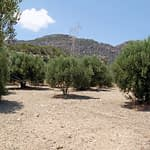 Building Plot with Olives, Agios Ioannis